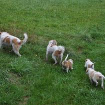 Immer schön hinter Erbse und Mama herlaufen, auch wenn das Gras hoch ist ...