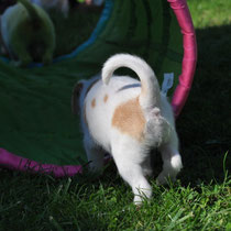 Effie - von hinten so hübsch wie von vorne ;-)