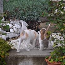 Erbse und Emmi haben sich in den Blumengarten vorgewagt...