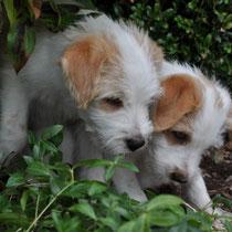 Edison und Effie