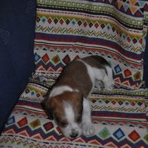 Und Eva schläft auf einem Stück Stoff, das einmal ihr zukünftiges Crunchy werden soll.