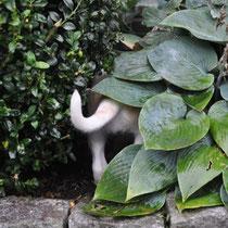 Ab ins Gebüsch, alles ist hochinteressant!