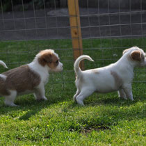 Perfekte Wachhunde: Esso und Erbse