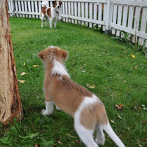Oh, oh, da wartet Bailey, die will wohl nicht mitspielen.