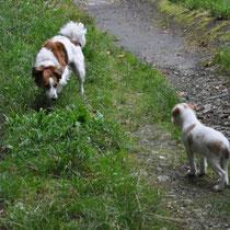 Respekt, Respekt: Bailey und Effie