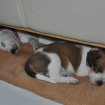 Unter dem Sofa schläft man hervorragend!