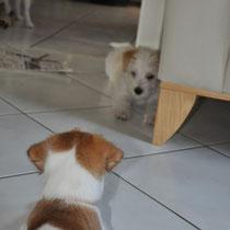 Emina und Elice haben sich fest im Blick.