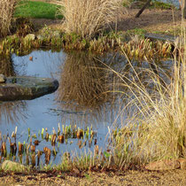 Der kurzgeschorene Teich