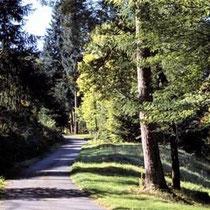 Galerie Européenne de la Forêt et du Bois - Ausstellung des Waldes und Holzes in Dompierre-les-Ormes