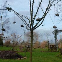 Wundervoller Apfelbaum