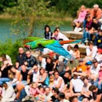 Le Parc des Oiseaux in Villars-les-Dombes - Vogelflugshow