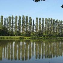 Lac de Mont de Chat - 3km von Maison Libellule