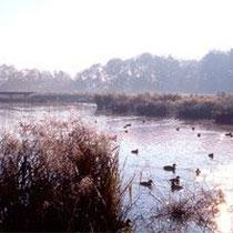 """Le Parc des Oiseaux in Villars-les-Dombes liegt im Seengebiet """"Les Dombes"""""""