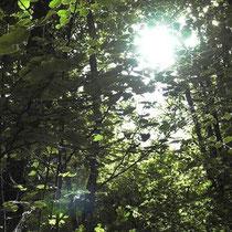 Galerie Européenne de la Forêt et du Bois - Ausstellung des Waldes und des Holzes