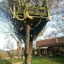 Im Winter sieht man gut, wie verwachsen das Baumhaus schon ist