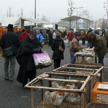 Frischwaren-, Haushalt-, Kleider-, Geflügel- und Tiermarkt in Louhans - jeden Montag morgen