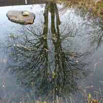 Spiegelung der Kastanie