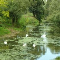 Viele naturbelassene Bäche und Flüsse durchziehen die Bresse