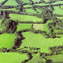 Eine Landschaft mit vielen Hecken und Feldern