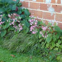 Blumen an der Nordseite machen Freude