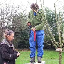 Der Apfelbaum bekommt Steine, um die Äste in eine geschicktere Position zu bringen