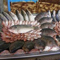 Fisch in Akko