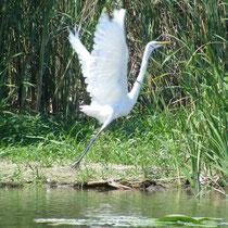 Vor allem die Vogelwelt ist auf einem Tagesausflug gut zu beobachten.