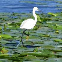 Die Fauna des Deltas ist artenreich und vielfältig.