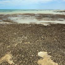 Junge Stromatoliten