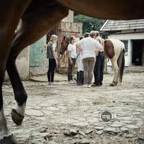 Siodłanie koni