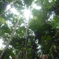 Rainforrest I