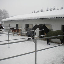 Paddocks im Winter
