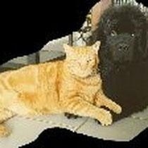 Launeddas avec son nouveau copain