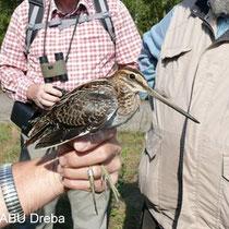 Geführte Exkursionen tragen zum Verständnis der Entwicklungsziele und der Akzeptanz des Naturschutzes sowie der wissenschaftlichen Vogelberingung bei.