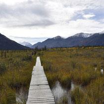 Holzsteg durch die matschige Landschaft des Coin Creek.