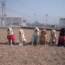 日本サービスドッグ協会引退犬の賛助会員です。 事務所訪問