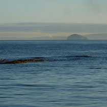 An atmospheric view of the Bass Rock from the Fife coastal path.
