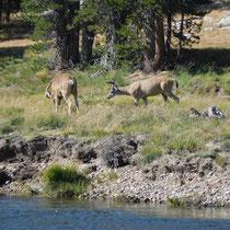 Die Herde bestand aus etwa 10 Tieren