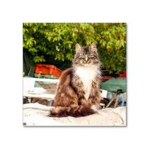 Fischers Katze