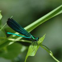 La chaume du Pontot : on y patauge tout l'été avec des bottes ou des sandales de bain en admirant la libellule.