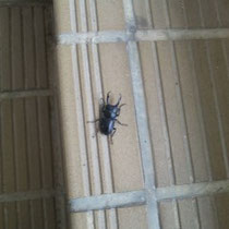 階段にくわがた虫。