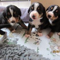 Die 3 Jungs  -  Boss Hugo, Blue und Big Ben
