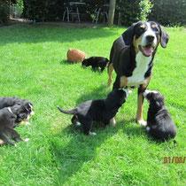 Aluna und ihre Hundekinder