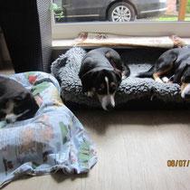 Bella, Aluna und Anca
