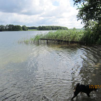 der schöne Plauer See (Meckl.Seenplatte)