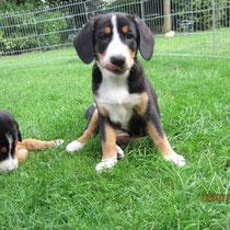 Eddy und Bella