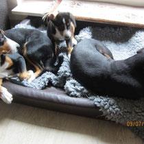 Bella mit Anca und Aluna