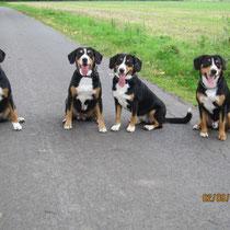 Abbie, Aluna, Anca und Anton