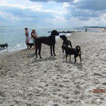 ......da gab es auch grooooße Hunde!