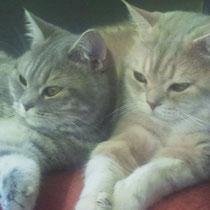 unsre Traumkatzen
